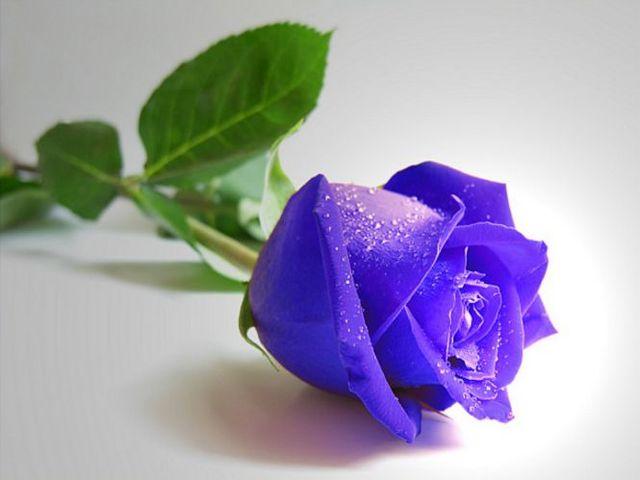 Ruže - Page 2 12000305