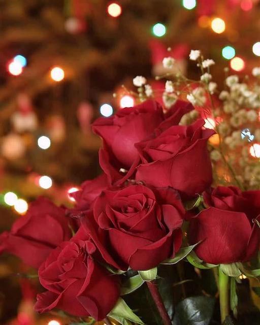 Ruže - Page 2 12000355