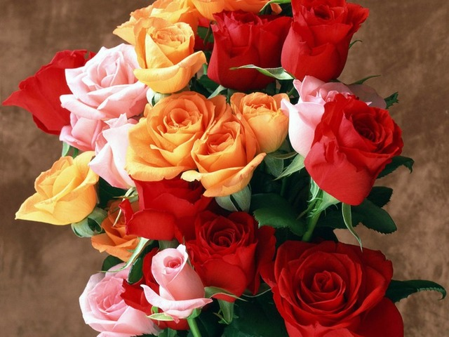 Ruže - Page 2 12274890