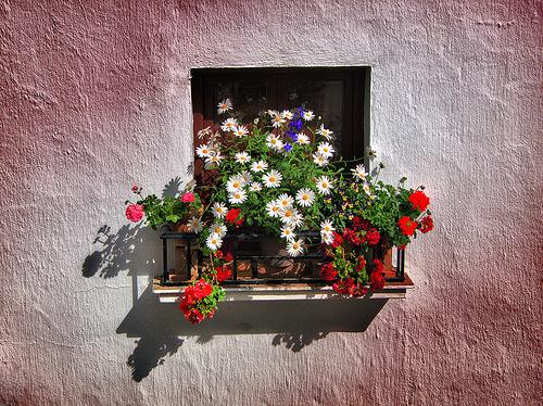 Cvijeće oko kuće  - Page 2 12510820