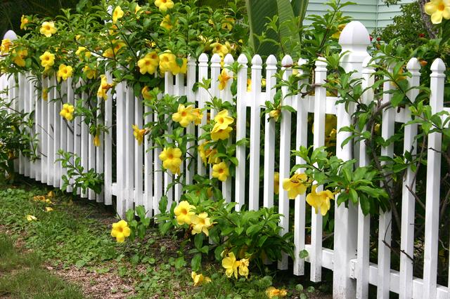 Cvijeće oko kuće  - Page 2 12510880
