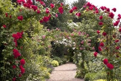 Cvijeće oko kuće  - Page 2 12517505