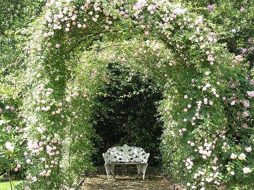 Čarobni vrt 12829065