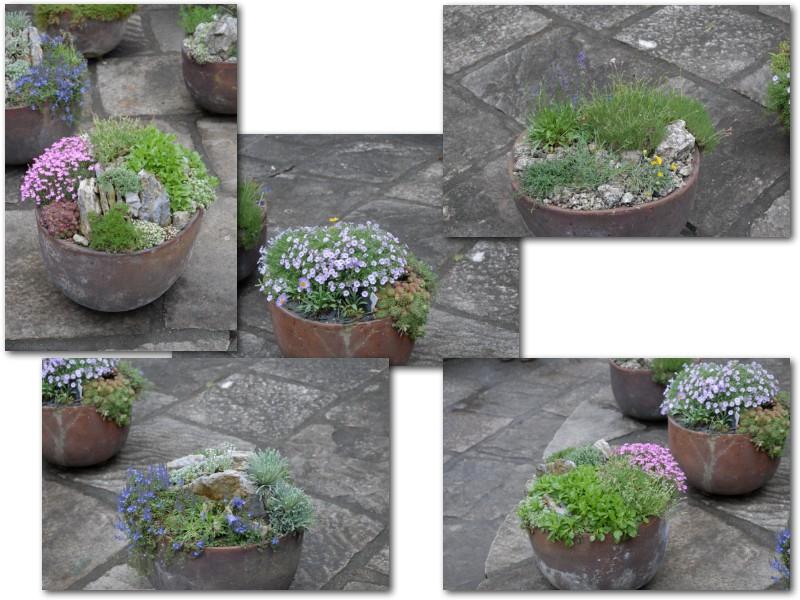 Rock' Gardener Club Prague 1711875