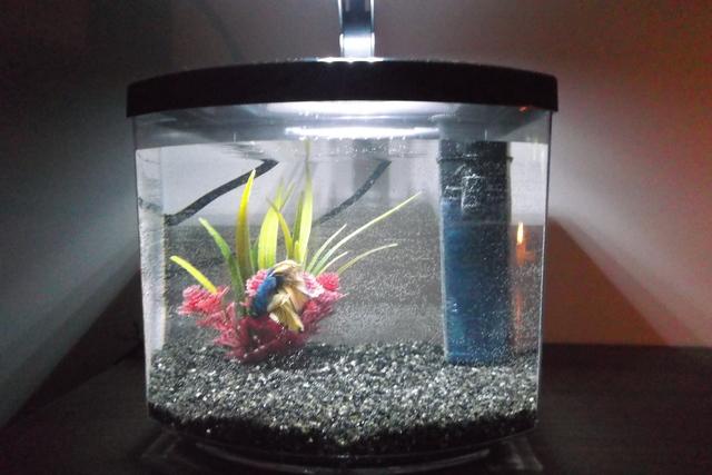 Aquariaforum be  u2022 Toon onderwerp   bettacub 7L + vietnamese kempvis